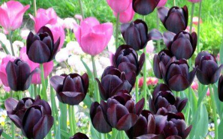 Frühling Blumen Blumenbeet Feng Shui und Architektur